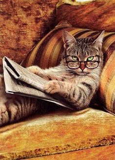 """"""" Nella prossima vita voglio essere un gatto.  Dormire venti ore al giorno e aspettare che ti diano da mangiare """" (  Charles Bukowski )"""