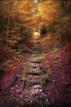 Abandoned railroad tracks being reclaimed by Mother Nature.
