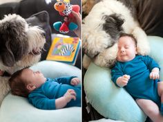 dogs WITH babies.  they get me.