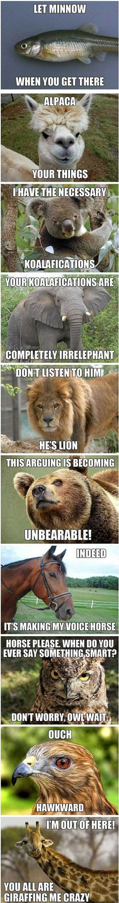 Some Really Bad (but FUNNY) Animal Puns