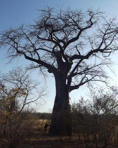 Chizarira National park, Zimbabwe Pula, African Safari, Zimbabwe, Continents, South Africa, National Parks, December, Child, Memories
