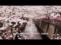 Nakameguro Sakura Festival 2015 - http://www.japanesesearch.com/events/nakameguro-sakura-festival-2015/ Nakameguro Sakura Festival 2015 takes place on April 5, 2015 along theMeguro River whichflows through the trendyNakamegurodistrict and is one of Tokyo's most famous sakuraspots.About800 cherry trees line a 3 kilometre section of the banks of the river, creating a sakura tunnel over the wa... -
