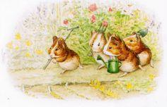 Image detail for -Beatrix Potter's guineapigs II - Guinea Pigs Photo (20358585) - Fanpop ...