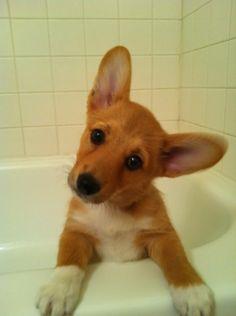 """Bath time? Yes?"""