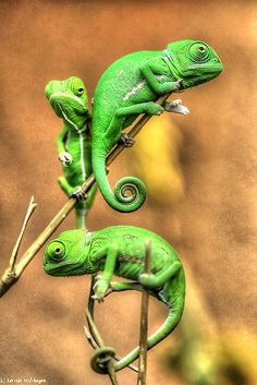 New Wonderful Photos: Love Watching Them Climb