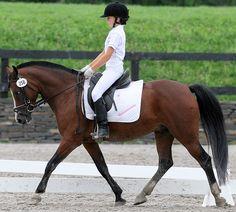 One elegant pony