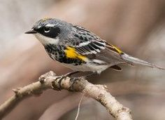 Search Results | All About Birds