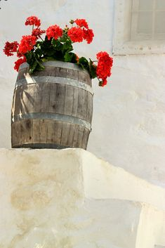 Pot filled with red geranium on whitewashed stairs. Hydra town, Hydra island, Saronian, Greece