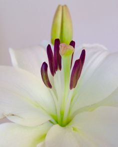 White Lily by Geeta Uka