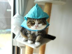 Maru is ready for the rain...bring it on!