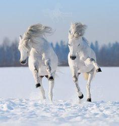 """The White Knight's Horses"""