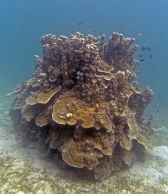 #Diving - Coral, Scuba Diving (Tauchen) in... so healthy