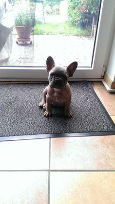 Unser neues Familienmitglied….Benny…12 Wochen :-) http://bit.ly/1lWuolX - our Smartphone App ==> http://bit.ly/1ewSxCP