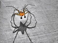Spider  by IRAWAN YUWONO