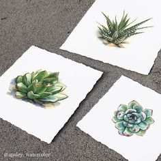 Had some test prints made and they look great -  my online print store will be open soon! I will be selling limited edition archival giclee prints of my succulent botanical illustrations I will let you guys know as soon as they are ready to ship! #prints #botanical by apsley_watercolor