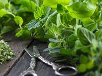 Vypěstujte si bylinky, letní grilování se bez nich neobejde