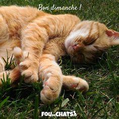 Facebook, Cat Love, Bonheur, I Love Cats, Animaux, Make Happy, Happy Sunday, I Don't Care