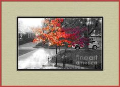 The Magic Dogwood Framed Print By Shelly Weingart