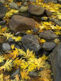 Bridalveil Creek by MistyDays CB