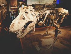 5 Family-Friendly Dinosaur Experiences near Calgary Dinosaur Skeleton, Dinosaur Fossils, Skeletons, Drawing Reference, Friends Family, Tourism, Lion Sculpture, Statue, Drawings