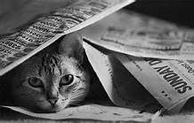 Cat under newsapers