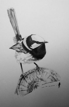 line drawing of a flying blue wren wren tattoo pinterest wren and drawings. Black Bedroom Furniture Sets. Home Design Ideas