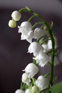 ~~Lily Of The Valley by Daniel Csoka~~