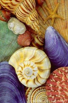 Beautiful shells ;)