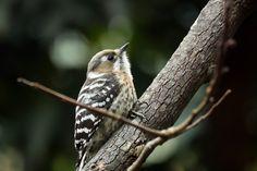 Finding Neverland, Forest Creatures, Walk In The Woods, Little Birds, Winter Garden, Dream Garden, Nature Photos, Animal Kingdom, Wild Flowers