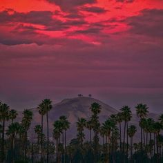 Two Trees and Pink Moments♥ Ventura, California Image by West Cooke Ventura California, Ventura County, California Homes, Two Trees, Palm Trees, Ventura Homes, Future Photos, Photo Projects, Santa Monica