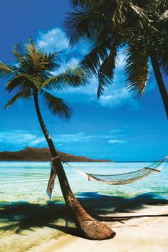 the Caribbean Island.........one day I will be sleep in this hammock!
