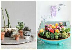 Esto de decorar con cactus se está convirtiendo en una adicción. Son plantas muy agradecidas, ya que siempre están verdes y no necesitan grandes cuidados.