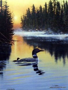 A loon family glides across the smooth lake waters in another version of artist Derk Hansen's Land of the Free series. Common Loons are powerful, agile divers. Beautiful Birds, Animals Beautiful, Beautiful Pictures, Wale, Gig Poster, Land Of The Free, All Nature, Mundo Animal, Wildlife Art