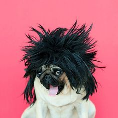Lol. For when you know that your dog really wants to put a wig on. It suits them!