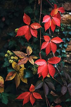 Stock photo of Beautiful autumn colors on leaves by jovanarikalo Leaf Photography, Autumn Photography, Tree Leaves, Plant Leaves, Autumn Scenery, Growing Vegetables, Nature Pictures, Autumn Leaves, Seasons