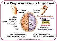 The way your brain is organized
