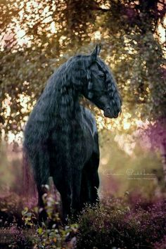 What a composition! This friesian horse fits beautiful in this nature with beautiful colours! Most Beautiful Animals, Majestic Animals, Beautiful Pictures, Cute Horses, Horse Love, Black Horses, Wild Horses, Horse Photos, Horse Pictures