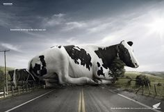 Sometimes braking is the only way out - white, black, ad, honda, animal, cow, spot, reclama, road, vaca, commercial