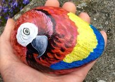 Parrot-painted-rock-stone-pebble-No-parrot-cage-perch-or-toy-or-aviary