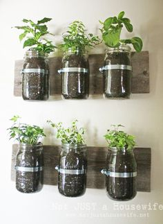 How To Decorate With Plants by @stacyrisenmay (love this cute mason jar planter board!)