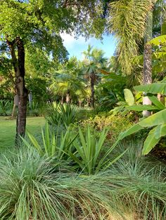 Our garden is a large part of Calabash. Here you will not only find balance and tranquillity but there is also a lot to discover. Jermaine is a great guide and will give you a great tour. Mood Images, Caribbean, Most Beautiful, Tours, Island, Beach, Garden, Plants, Garten