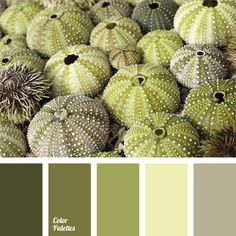 Kiwi Color Palettes If You Need A Muted Green Palette