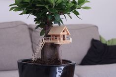 A tiny treehouse for my Bonsai
