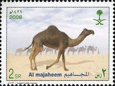 2008: Dromedary (Camelus dromedarius) (ערב הסעודית) (Arab Camels) Mi:SA 1534,WAD:SA001.08