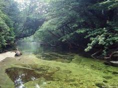 Impenetrable forests of Yakushima island and worth the effort - J