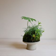 Office desk pot plant - would look amazing on my boring desk!