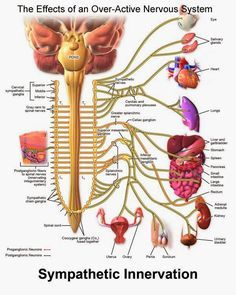 Fibromyalgia Nerve Pain - There May be more to it than you think.