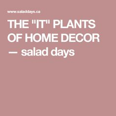 "THE ""IT"" PLANTS OF HOME DECOR — salad days"