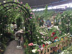 5月12日(木)より国際バラとガーデニングショウ2015が開催されます。蓼科高原バラクライングリッシュガーデンではケイ山田のオールドローズあふれる庭づくり Happy Garden 25と題しました、オールドローズをふんだんに使ったかわいいお庭が完成しました!!バラクラ各ショップも併設しております。皆様のご来場お待ちしております。もっとご覧になりたい方は、国際バラとガーデニングショウでご確認ください!!バラクラ各ショップも併設しております。ショッピング&バラの祭典をぜひお楽しみください。スタッフ一同お待ちしております。