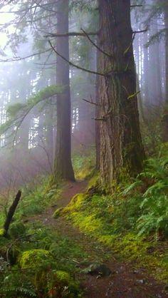 Trail from Wahkeena Falls, Columbia Gorge